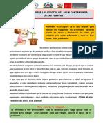 GUIA DE INDAGACIÓN CRECIMIENTO DE LAS PLANTAS