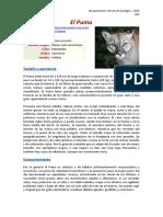 Estudio de caso - El Puma