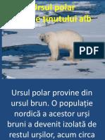 Ursul polar ppt