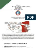 CLASE-II-ANATOMIA-Y-FISIOLOGIA-DEL-SN-DR-SANTOS-PUAC-REPASO-GENERAL