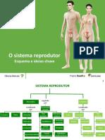 Esquema_IdeiasChave_SReprodutor_Santillana