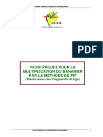 fiche_pif_plans_issus_de_fragments_de_tige