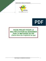 fiche_pif_plans_issus_de_fragments_de_tige
