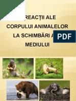 Adaptarea animalelor la mediu