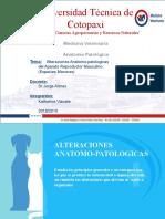 anatomia patologica (2)