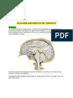 7-Cervelet.pdf
