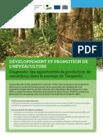 6 Flyer Developpement Et Promotion de l Heveaculture Fr