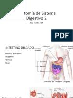ANATOMIA DE INTESTINOS.pdf