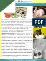 inta_folleto_granja_conejos