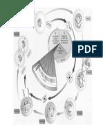 Ciclo Celular-esquema Grande