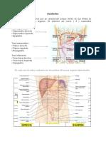 Taller cuadrantes abdominales e irritación peritoneal