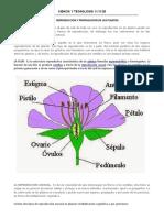 REPRODUCCION Y PROPAGACION DE LAS PLANTAS