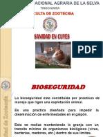 SANIDAD DE CUYES.ppt