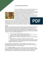 Practical Example of Microfinance