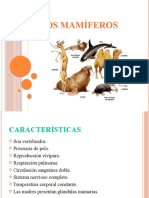 Los Mamíferos