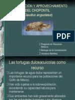CONSERVACIÓN Y APROVECHAMIENTO DEL CHOPONTIL
