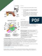 anatomia y fisiologia vestibular.docx