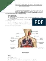 1-Unidad7Aparato_respiratorio