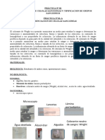 PRÁCTICA 1-LABORATORIO CELULAS SANGUINEAS