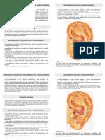 panfleto auriculoterapia-2