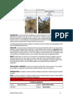 ficha botanica 1 oficial.pdf