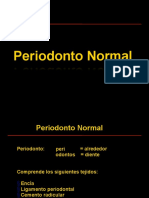 Periodonto normal Keynote 2017-3