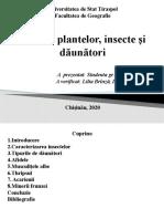 Bolile plantelor, insecte si daunatori