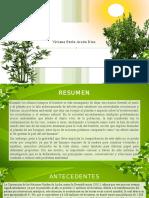 Deforestación_Viviana_Paola_Arcón_Díaz