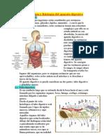 6163644-anatomia-y-fisiologia-del-aparato-digestivo