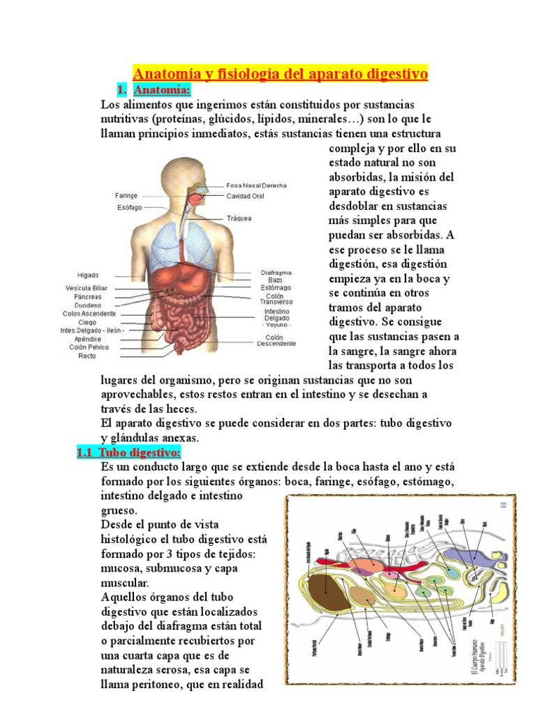 Bonito Anatomía Y Fisiología Capítulo 3 Inspiración - Anatomía de ...