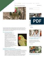 Profil de la perruche alexandre - HARI francais