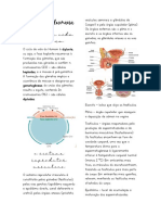Reprodução Humana-Masculino.pdf