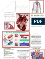 Brochure Aparato Circulatorio 1