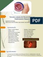 apresentação embriologia