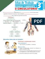 El-Aparato-Circulatorio-para-Tercer-Grado-de-Primaria
