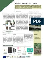 Fiche technique-greffage aubergine tomate.compressed.pdf