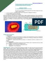 Infecciones Virales del Sistema Nervioso - Agentes Causales