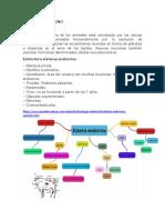 SISTEMA ENDOCRINO (1)