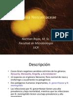 Neisseriaceae