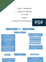 1.Tubo y Medula Mapa Conceptual