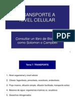 CV 7 Transporte[5]