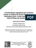 A fosforilação regulatória por proteína cinase A modula de forma hierárquica as interações intra- e inter-moleculares da Cu(I)-ATPase de levedura, Ccc2 [FINAL]