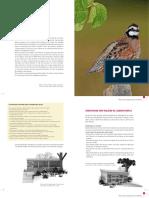 elever caille pour l-ornement.pdf