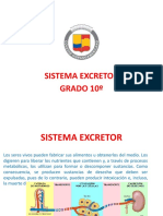 sistema excretor (1)-2