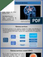 06. Sistema nervioso