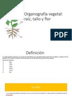 ORGANOGRAFÍA VEGETAL.pdf