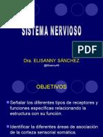 1.ORGANIZACION DEL SNC-RECEPTORES.ppt