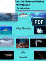 creatures that live above and below thermocline
