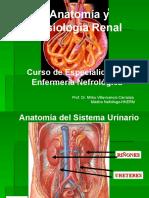 Anatomia_sistema_urinario