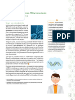 ADN y síntesis de proteínas
